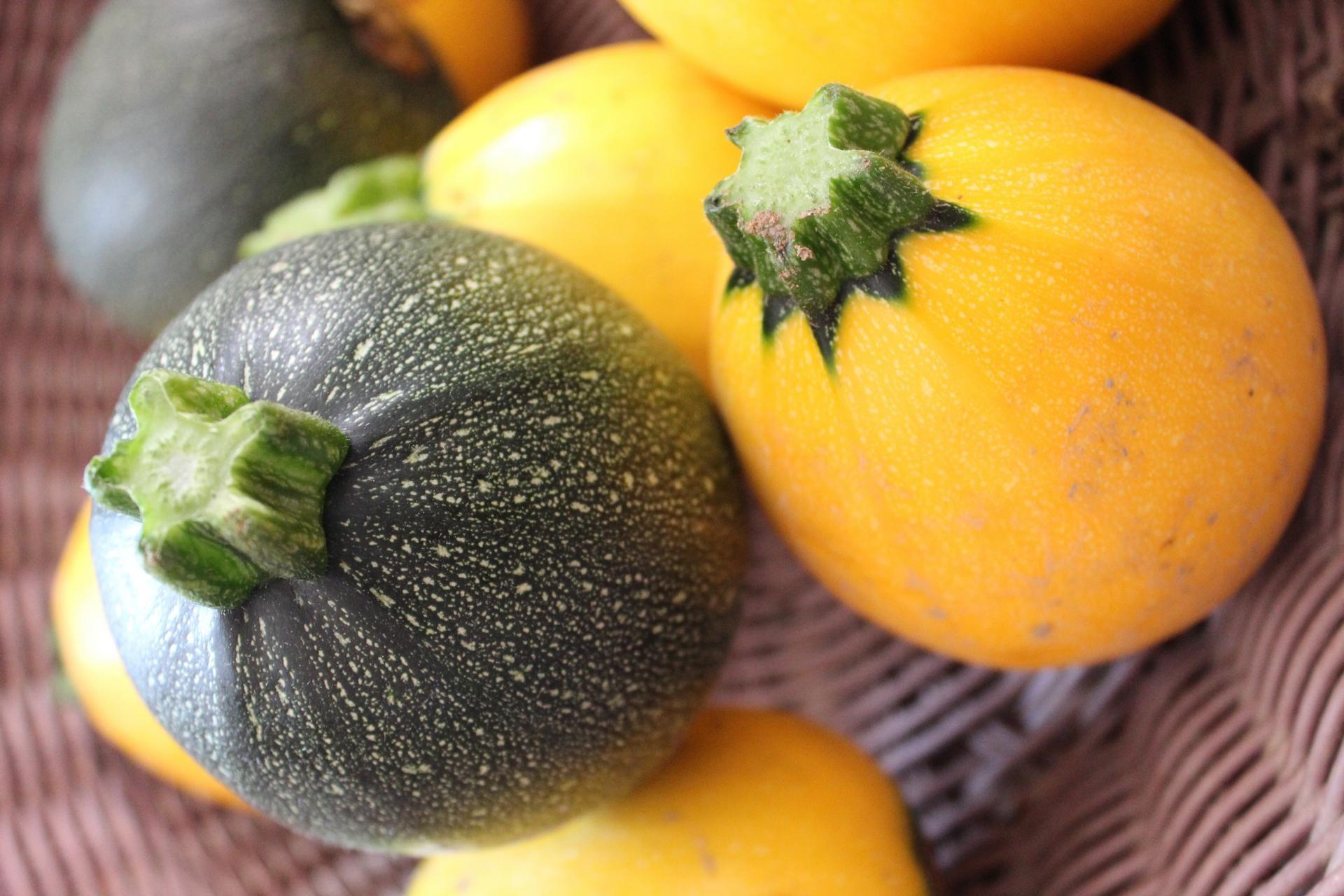 Courgette Ronde jaune | Légumes | La Ferme des 4 Saisons